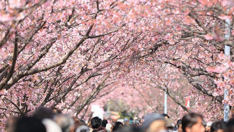 Trees blossom in the spring