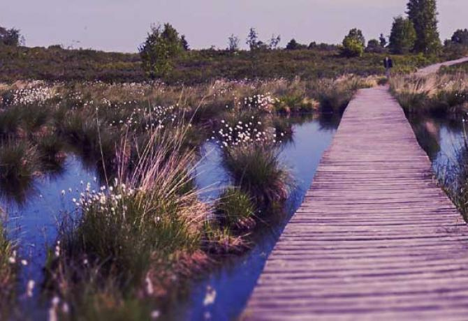 A path leading through a marsh.