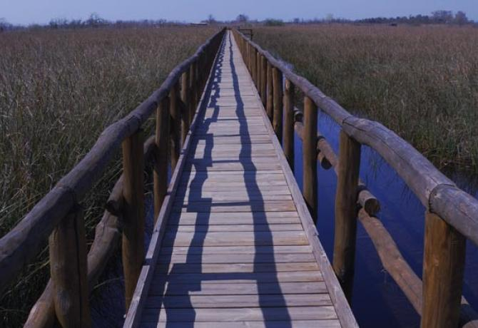 A wood bridge running through a marsh